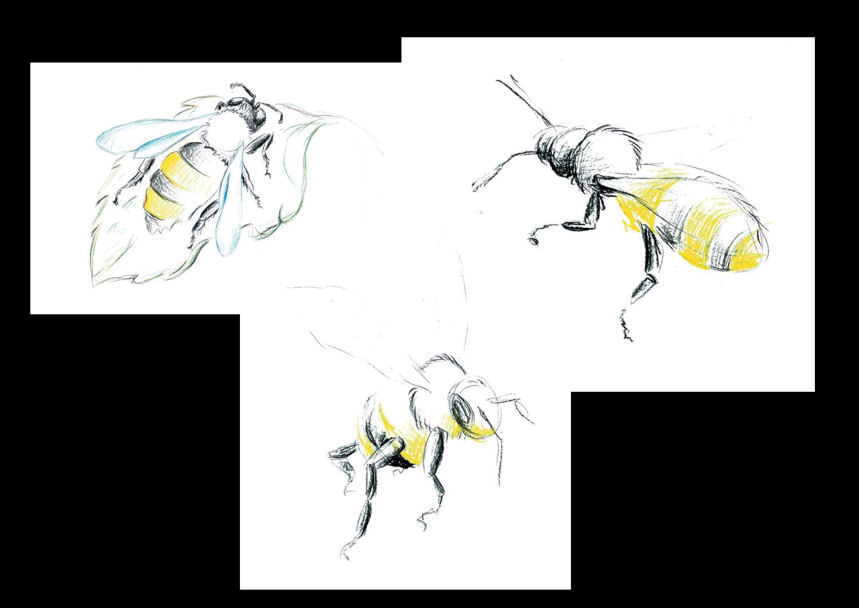 Scribbles von Bienen